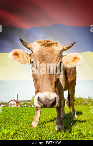 Cow with flag on background series - Mauritius - Stock Photo