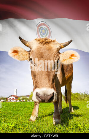 Cow with flag on background series - Paraguay - Stock Photo