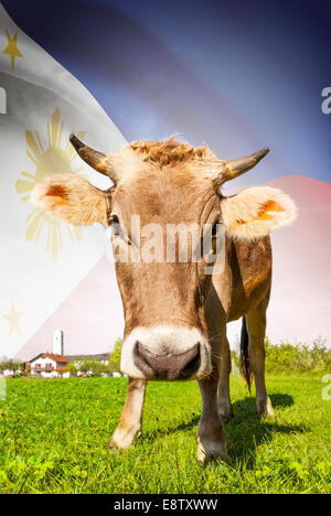 Cow with flag on background series - Philippines - Stock Photo