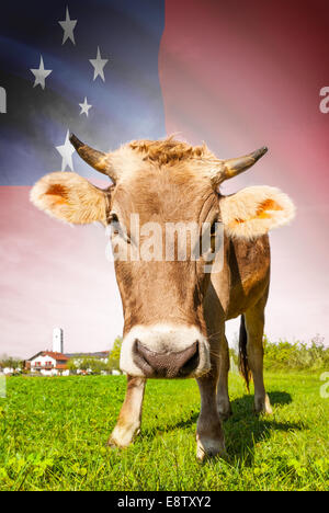 Cow with flag on background series - Samoa - Stock Photo