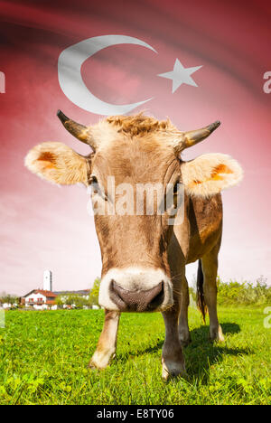 Cow with flag on background series - Turkey - Stock Photo