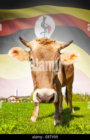Cow with flag on background series - Uganda - Stock Photo
