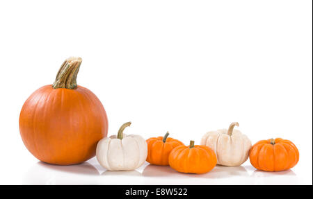 Pie pumpkin and mini pumpkins in a row against white background - Stock Photo