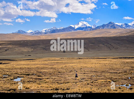 Woman alone walking in the plateau with the Cordillera Real on the back, Bolivian plateau Altiplano, Bolivia - Stock Photo