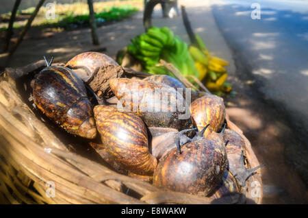 Snail farming in Nigeria, snails for sale by the road - Stock Photo