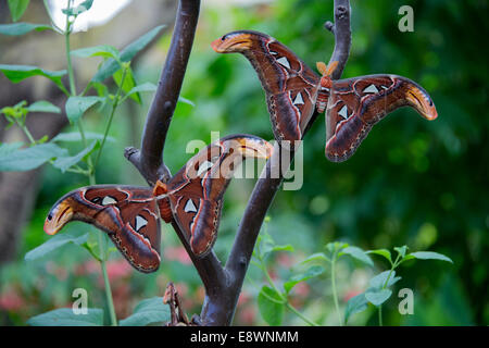 two moths on a branch - Stock Photo