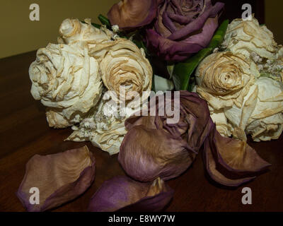 dried roses dying flowers dead petals - Stock Photo
