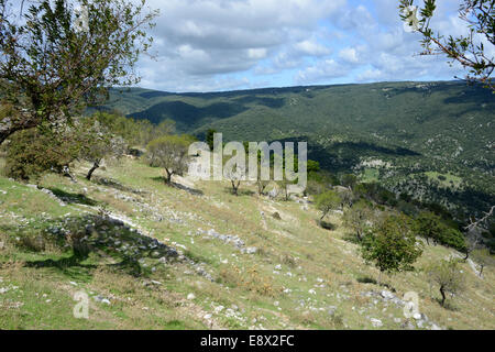 Flocks of sheep on mountainside, Monte Sant'Angelo, Gargano peninsula, Puglia, Italy - Stock Photo