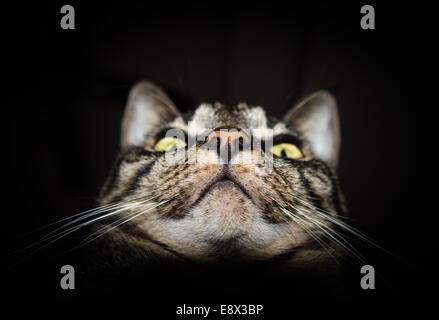Closeup detailed photo of tabby cat face isolated on black background - Stock Photo