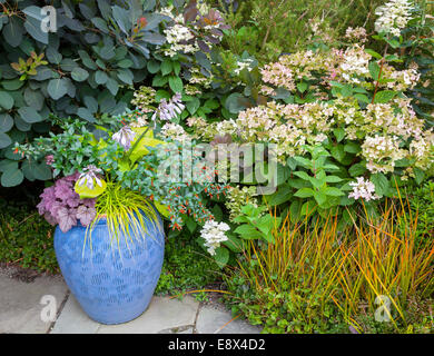 Vashon-Maury Island, WA:  Ceramic pot with Japanese forest grass, hosta, penstemon, and heuchera with smoke bush - Stock Photo