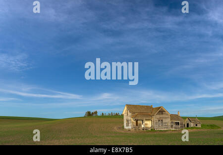 Whitman County, WA : Weathered grey abandoned house under open skies in a planted field near Pullman, in the Palouse - Stock Photo