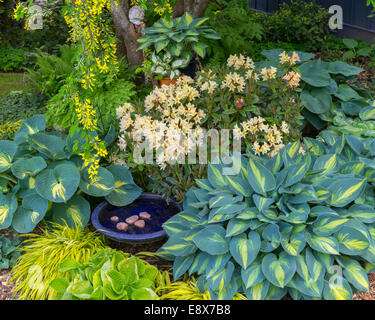 Vashon-Maury Island, WA: Spring garden bed with blooming rhododendron, grape hyacinth, hostas, and Japanese forest - Stock Photo