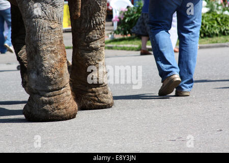 man and an elephant walking down the street - Stock Photo