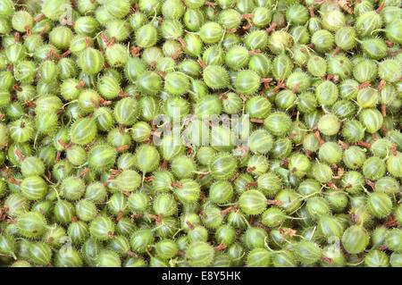 Background of gooseberry - Stock Photo