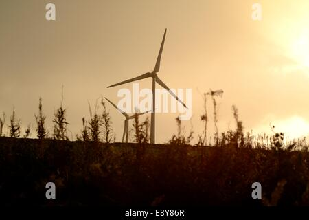 Two wind turbines in a farm field silhouetted against a cloudy sky and seen from behind the weeds at the edge of - Stock Photo