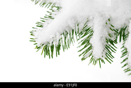 snow on fir tree branch close up - Stock Photo