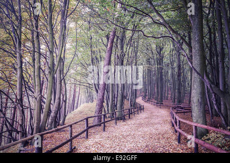 Retro filtered picture of a forest. - Stock Photo