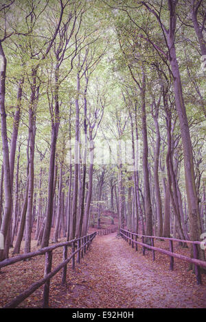 Retro vintage filtered picture of wooden path in forest. - Stock Photo