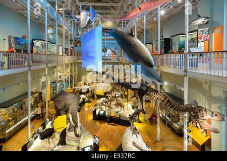 Natural World galleries, National Museum of Scotland, Edinburgh, Edinburgh, Scotland. - Stock Photo