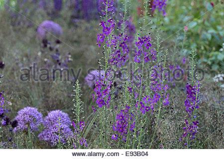 rhs chelsea flower show 2014 cloudy bay garden designer andrew wilson