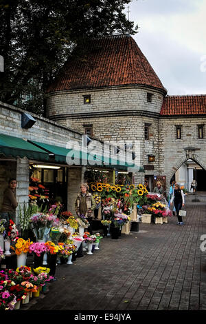 Tallinn Estonia's medieval Old Town Viru City Gate viewed from outside the walls - Stock Photo