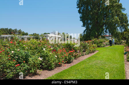 Rose Garden Tea Room and Cafe, The Huntington Library, Art Stock ...