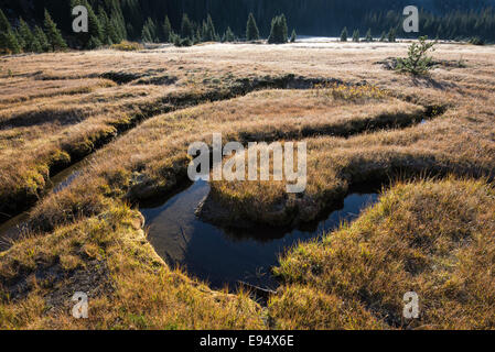 Small stream winding through a meadow in Oregon's Wallowa Mountains. - Stock Photo