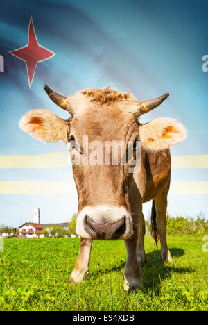 Cow with flag on background series - Aruba - Stock Photo