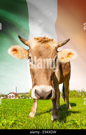 Cow with flag on background series - Ireland - Stock Photo