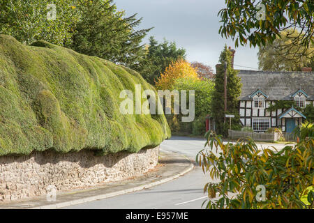 The rural village of Brampton Bryan and its wonderful Yew hedge,  Herefordshire, England - Stock Photo