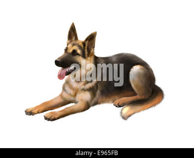 german shepard dog laying isolated on white background - Stock Photo