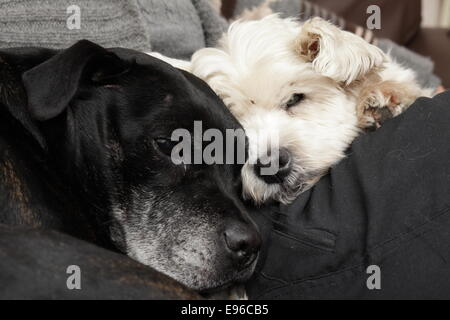 Old dogs resting - Stock Photo