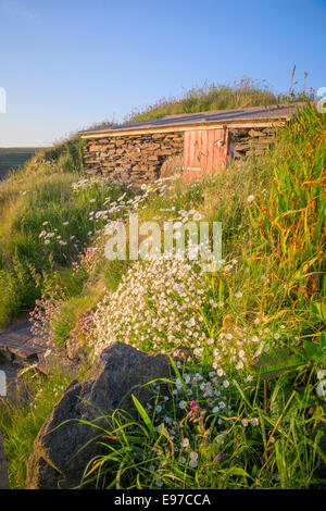 Stone shed surrounded by wild flowers near St David's, Pembrokeshire. - Stock Photo