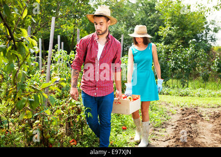Young couple harvesting tomatoes in vegetable garden - Stock Photo
