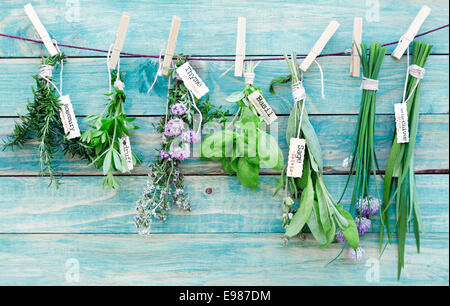 Assorted hanging Herbs on an old and vintage wooden blue background, for seasoning concept. - Stock Photo