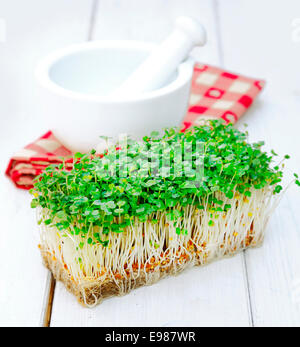 Indian cultivated garden Cress in front of a mortar with pestle on a checkered napkin. Herbs on a wooden background - Stock Photo