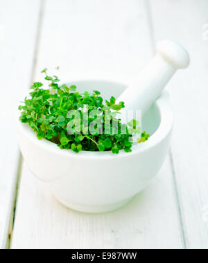 Garden cress in a mortar with pestle on a wooden background on white. - Stock Photo
