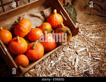 Pumpkins in a crate on a straw background for fall concepts - Stock Photo