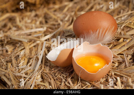 Colourful yellow yolk in a broken eggshell with a whole egg and feather nestling on a bed of clean straw with copyspace - Stock Photo