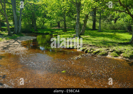 Ober Water at Ober Bridge, New Forest - Stock Photo