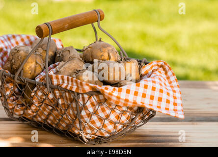 Rustic wire mesh basket, lined with checkered fabric and containing a fresh summer crop of new potatoes, placed - Stock Photo