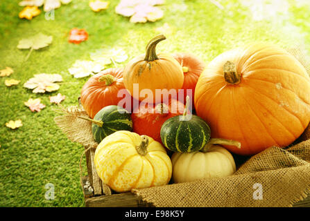 Variety of Pumpkins and Gourds in Wooden Crate with Fall Leaves in Background - Stock Photo