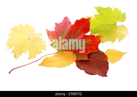 Vibrant red autumn leaf amongst a selection of leaves in yellow and green showing the colorful palette of the fall - Stock Photo
