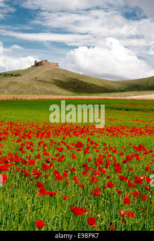 Poppies and castle on green grass - Stock Photo