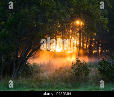 Sunlight streaming through a dense, misty forest - Stock Photo