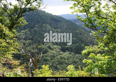Woods in the Harz, near the mountain Brocken, Germany, on Aug. 24, 2013. - Stock Photo
