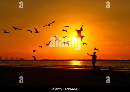 Female feeding birds at sunset on the  Jumeirah beach in Dubai - Stock Photo