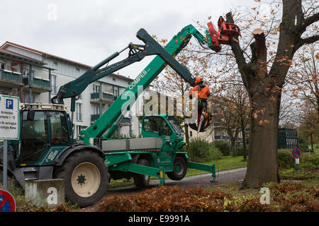 Workers chop down a tree at a housing estate in Bielefeld, Germany - Stock Photo