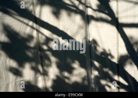 Tree branch shadows on a white canvass background - Stock Photo