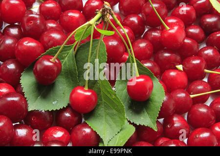 Sour cherries - Stock Photo